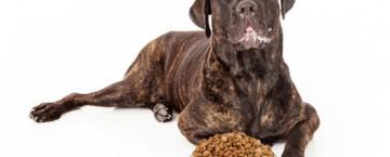 Hund vor Fressen