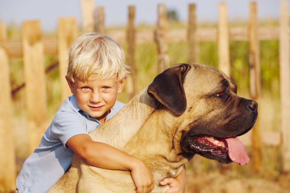Familien Hund Cane Corso